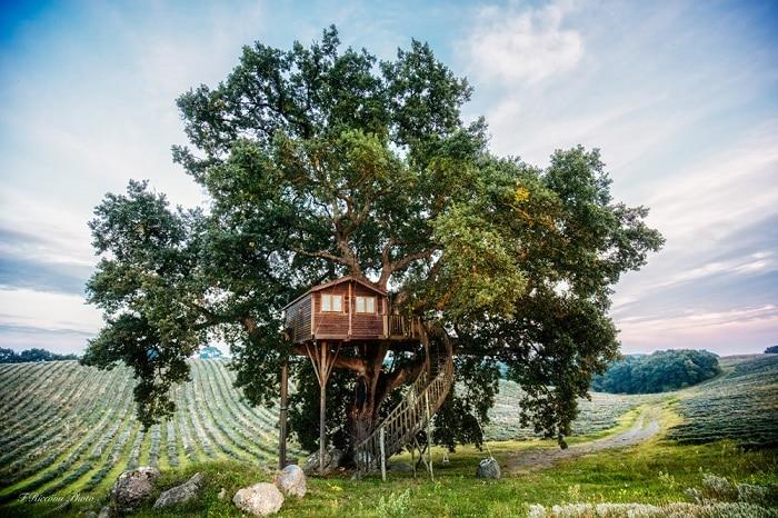 Case sull'albero: La piantata 3